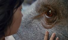 Okja s'offre une featurette avant sa sortie sur Netflix