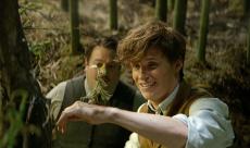 Box-Office : timide démarrage pour Les Animaux Fantastiques
