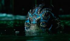 Un extrait de The Shape of Water révèle la créature de Guillermo Del Toro