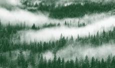 L'aventure Twin Peaks se terminera en livre à l'automne