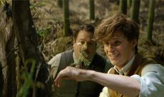Box Office : Les Animaux Fantastiques dépasse le cap des 500 millions de dollars