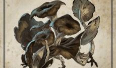 De superbes Champidragons envahissent la toile avec le défi Mushroom #Smaugust 2020