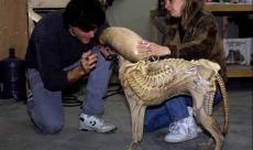 Un petit chien est transformé en Xénomorphe dans une vidéo making-of d'Alien 3